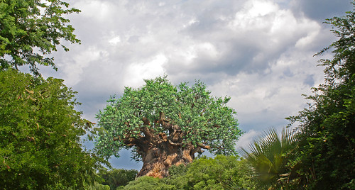 Disney World trip - day 5 - Animal Kingdom