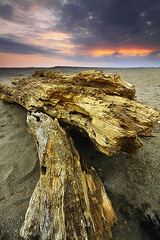 Drift In Dreams (tropicaLiving - Jessy Eykendorp) Tags: light sunset sky bali beach nature water clouds indonesia landscape rocks driftwood 1022mm batubelig outdoorphotography canoneos50d tropicaliving hitechfilters rawproccessedwithdigitalphotopro tiffproccessedwithadobephotoshopcs3 laluciolabeach driftindreams