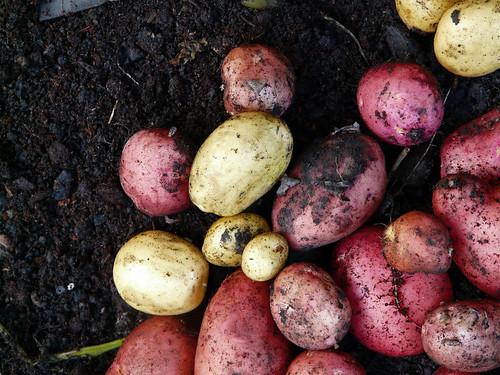 take my potatoes, please!