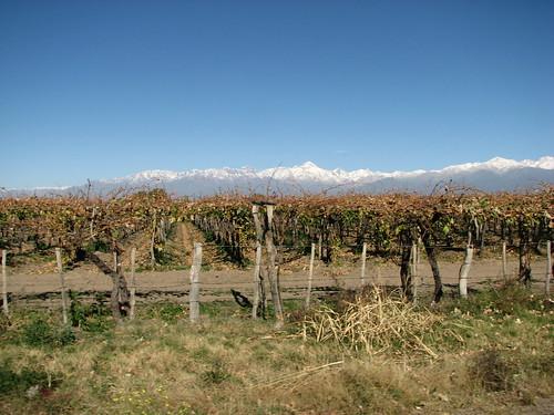 Parral + Montañas Vineyard