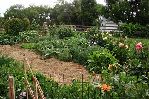 Vege Garden looking North