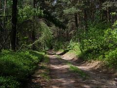 Przez las (magro_kr) Tags: road las forest poland polska droga malopolska małopolska małopolskie malopolskie szlakorlichgniazd eaglesneststrail kosmolów kosmolow