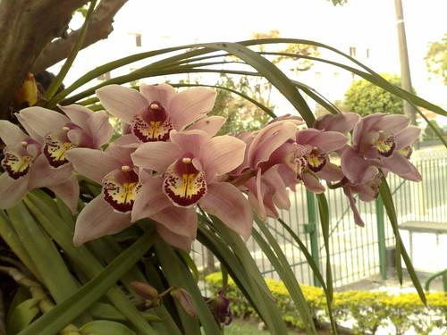 flores no meu jardim letra: chegou mais cedo, pelo menos para as flores daqui do prédio