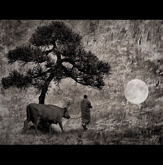 Zen Ox  -  IV (h.koppdelaney) Tags: life light art digital photoshop self cow symbol path buddha monk buddhism philosophy ox story zen mind bonsai meditation teaching wisdom quest awareness consciousness symbolism psychology archetype hourofthesoul graphicmaster