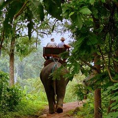Jungle Trek (Butch Osborne) Tags: travel trek magazine thailand island reisen asia published fotografie wildlife digitale revista journal tailandia jungle traveling airlines frontpage lifeisgood oat philipines revue magazinecover puravida elephanttrek deviaje jungletrek mustsee gazette covershot wow1 wow2 fiatlux mabuhay almacn supershot thegalaxy topshots  recmara digitalefotografie golddragon platinumphoto  overseasadventuretravel estremit philipineairlines bucketlist  overseasadventuretours mabuhaymagazine zensationalworld peopleenjoyingnature mygearandmepremium mygearandmebronze mygearandmesilver mygearandmegold mygearandmeplatinum mygearandmediamond   aboveandbeyondlevel1 aboveandbeyondlevel2
