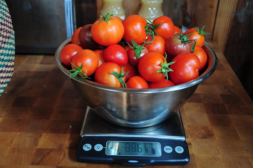 My entire ripe harvest this weekend was about seven pounds.