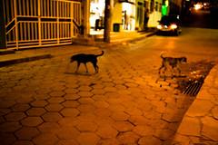 03 (icaromoreno) Tags: shadow minasgerais ensaio essay loneliness interior arts sombra viagem poesia melancholy artes solido autoral melancolia elegia