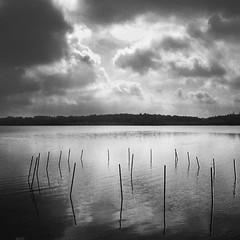 Art Installation on Lake Wingra? (Madison Guy) Tags: sky blackandwhite bw art water wisconsin clouds reflections sticks madison installation poles rods wi lakewingra 2009yip