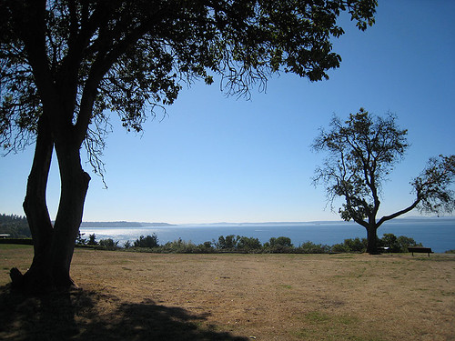 Madrona Trees on Bluff above beach
