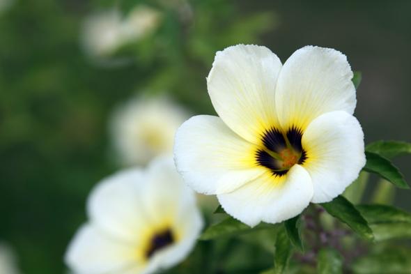 092609_flower_01