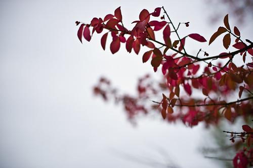 branching off