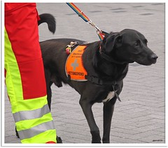 Rettungshund - rescue dog