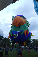Canberra Balloon Festival, 2014 (Anna Calvert Photography) Tags: sky people balloons flying parrot australia canberra 2014 canberraballoonfestival soccerballoon