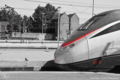 307 - etr500 48-A 9-9-2008 S.M.N. FIRENZE - TIT 307 (Frank Andiver TRAIN IN TUSCANY) Tags: italy train frank photo italia photos rail trains tuscany rails locomotive toscana treno fs treni ferrovie andiver