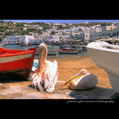Pelicans of Mykonos Harbor (j glenn montano 3) Tags: pelicans island greek harbor glenn mascot greece montano cyclades mykonos petros justiniano aplusphoto colourartaward