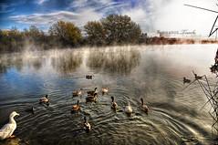hdr duckies (Kris Kros) Tags: world california camera photoshop photography high raw dynamic ducks adobe kris range hdr duckies kkg cs4 photomatix kros kriskros 1xp hdrduckies kkgallery