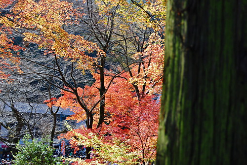 Autumn - Mt. Takao Hike