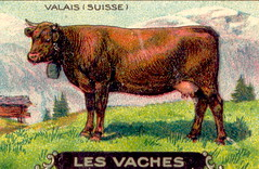 vachesuiss2