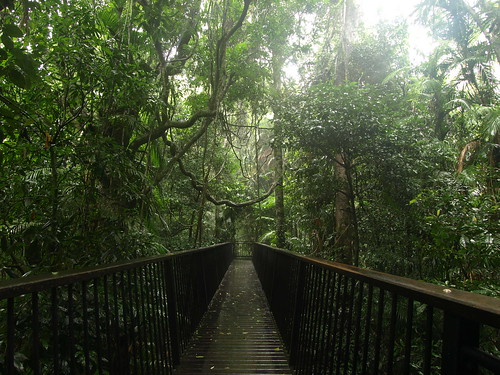 Rainforest canopy boardwalk | Flickr - Photo Sharing!