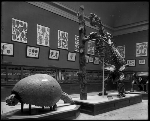 Mesozoic Fossils on Flickr Commons