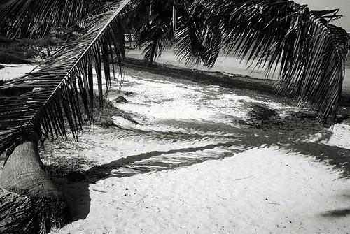 Palm @ Bahia Honda