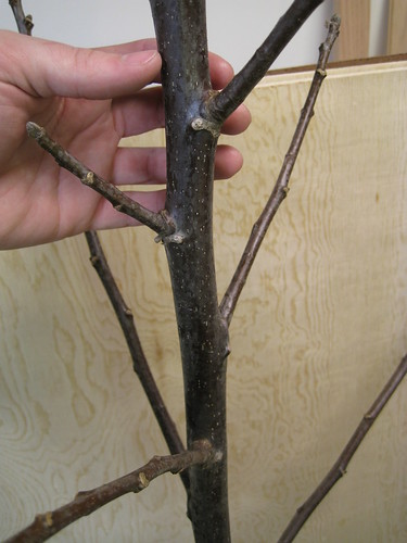 closeup on branch or tree with hand for scale