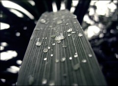 (juan-fotos) Tags: plant planta hoja rain leaf lluvia highway waterdrop drop autopista gota raindrop