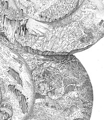 city-sprout (Carlos Calvet) Tags: city detail ink drawing carlos sprout section germination calvet