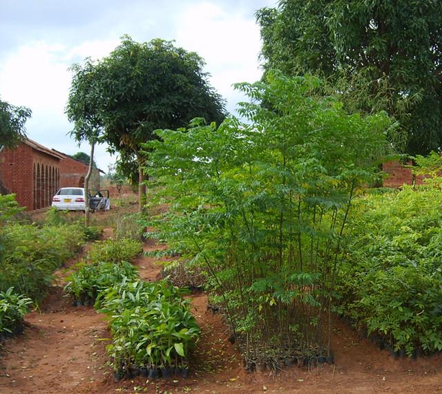 10 Tree nursery