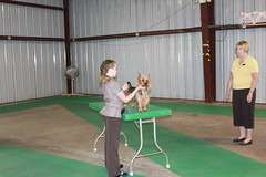 Junior Showmanship 2009 Illinois
