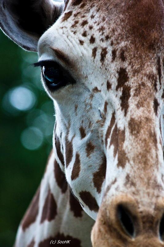 Look into my Eye @ National Zoo, KL, Malaysia