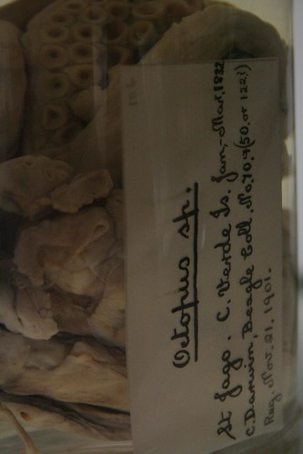 Darwin's octopus label