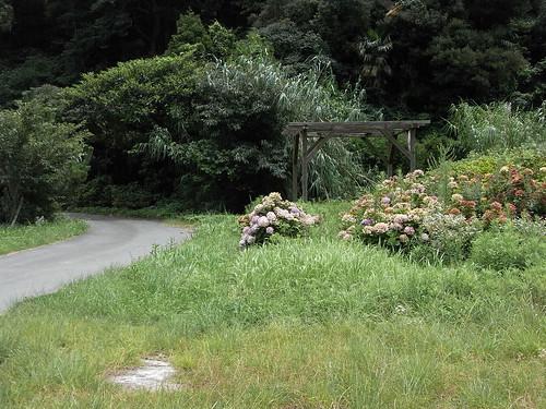 Flower-012