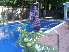 downsized_0722090917 (rlmmoldan) Tags: socks rosies kal cotty