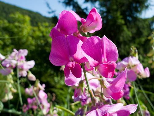 Flowers in Lellig