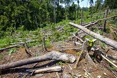 Deforestation - PICOP Bislig Mindanao_MG_1014-146 (fveronesi1) Tags: asia philippines mindanao