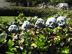it's not halloween unless there are skulls drying on the hedge....