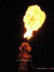 (Aithal's) Tags: canon fire dance tiger tigers procession tradition pili s3 folkdance 2009 mangalore huli murali kudroli vesha kudla canons3 hulivesha aithal pilivesha tigerdance mangaloretigers aithals mangalorepili mangalorespecial dasara2009 kudrolidasarahuli