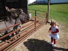 Lilliann Feeding The Donkeys