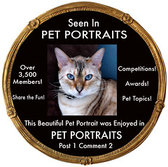PET PORTRAITS COMMENT CODE No.1-2 (by designs 4U in mind)