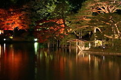 Rikugien Foliage at Night (AJ Brustein) Tags: autumn light orange reflection green fall water up japan night canon aj tokyo evening pond scenery foliage   lit  matsu rikugien 30d  brustein