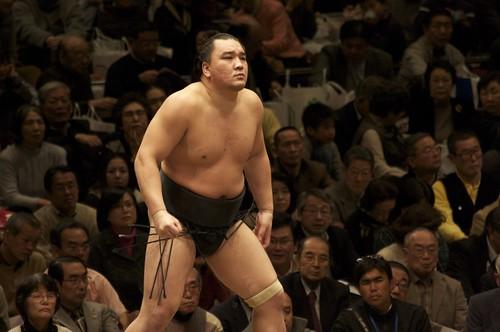 Sumo - Harumafuji