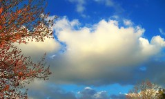 Winter Sky (Chris C. Crowley) Tags: trees winter clouds colorful florida scenic blueskies daytona wintersky naturesbest skyclouds liberality southdaytona walkinginbeauty chriscrowley celticsong22 zenenlightenment bellezasdelmundo