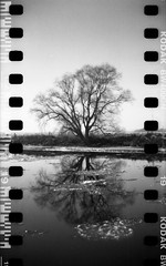 icy reflection (Paul Petruck) Tags: winter bw tree film water 35mm landscape holga blacknwhite serie seenintheinterestingnessarchives