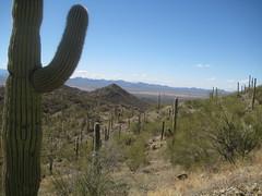 IMG_1886 (Puggeroni) Tags: tucson saguaronationalpark