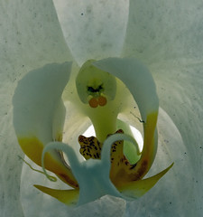 orquidea - detalhe (joao barroca) Tags: riodejaneiro jardimbotnico 180mm clubefotorio cfrj markiii1ds