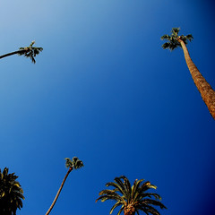 Blues!!! It's Monday Blues!!! (.I Travel East.) Tags: california blue sky green palms losangeles nikon palmtree beverlyhills mardigras cgb d80 itisblue bluelundigras