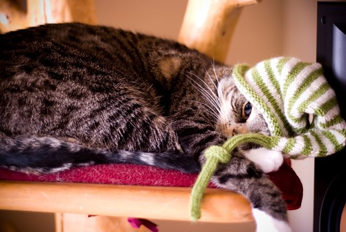 irish pixie hat on cat