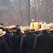 Amish Auction hats