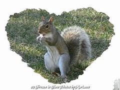 "FBI: P2300187+1 I LOVE Ms WEBSTER.... LOOK AT HER CUTE LITTLE FACE>> ISN""T SHE ADORABLE ???? (Frozen in Time photos by Marianne AWAY OFF/ON) Tags: nature hearts squirrel squirrels heart critter wildlife critters animalplanet fbi backyardcritters sciuruscarolinensis blueribbonwinner easterngreysquirrel youlookinatme favorites5 friends~ framedphotos outdoorphotography heartsallhearts heartframe nationalgeographicwannabes platinumphoto funnysquirrels faithfulflickrfriends squirrelspool favoritesbyinterestingness heartawards theperfectphotographer goldstaraward welovehearts dragongoldaward bestofsquirrels cherryontopphotography crazyaboutnature ilovemypics photosmilesphotosthatmakeyousmile natureunlimitedpublicgroupforever photowatermarkframes webstersadventures mswebster grrreatworks naturegreenstar smallcreatureswilllovethisplace checkoutthenewphotosofmswebster letstalkaboutloveandpeaceinnatureonlynature outdoorphotographythegroupthatsavewildlifewithpictures commentedwithadorableunlimited newphotosofmswebster adventuresofmswebster"